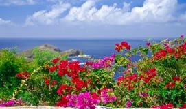 Sueños tropicales fotografía de archivo libre de regalías