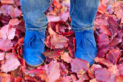 Suede boots in autumn leaves Royalty Free Stock Photography