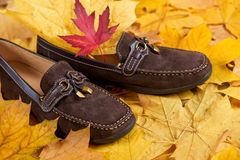Suede shoes on autumn leaves background Stock Image