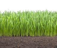 Suelo de la hierba del trigo del campo Foto de archivo libre de regalías