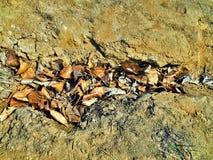 Suelo de la textura de la arcilla de las hojas imágenes de archivo libres de regalías