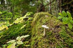Suelo del bosque Imagenes de archivo