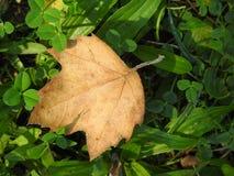 Suelo do EL de Hoja de otoño en fotografia de stock