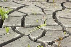 suelo e hierba durante las grietas de la sequía Fotografía de archivo libre de regalías