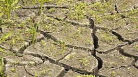 suelo e hierba durante las grietas de la sequía Fotos de archivo