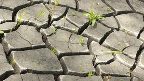 suelo e hierba durante las grietas de la sequía Foto de archivo