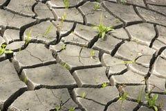 suelo e hierba durante las grietas de la sequía Fotos de archivo libres de regalías