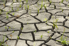 suelo e hierba durante las grietas de la sequía Fotografía de archivo