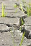 suelo e hierba durante las grietas de la sequía Imagenes de archivo