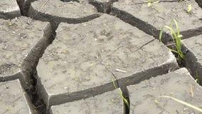 suelo e hierba durante las grietas de la sequía Imágenes de archivo libres de regalías