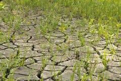 suelo e hierba durante las grietas de la sequía Imagen de archivo libre de regalías