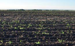 Suelo fértil, arado de un campo agrícola Imágenes de archivo libres de regalías