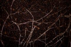 Suelo fértil con las raíces Imagen de archivo