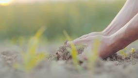 Suelo fresco conmovedor del hombre Agricultura almacen de video