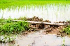 Suelo para el arroz Imagen de archivo libre de regalías