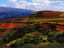 Suelo rojo de Yunnan seco Imágenes de archivo libres de regalías
