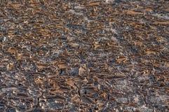 Suelo seco en el jardín fotografía de archivo
