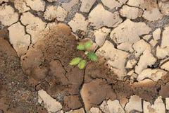Suelo seco y arena Imagen de archivo