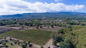 Suelo siciliano con las uvas para la cosecha de la uva Imagen de archivo