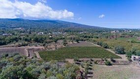 Suelo siciliano con las uvas para la cosecha de la uva Foto de archivo libre de regalías