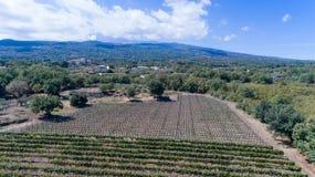 Suelo siciliano con las uvas para la cosecha de la uva Imágenes de archivo libres de regalías