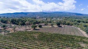 Suelo siciliano con las uvas para la cosecha de la uva Fotografía de archivo