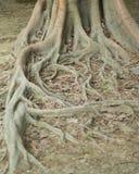 Suelo y raíces Foto de archivo