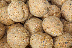 Suet balls Stock Photography