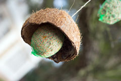 Suet balls. On a tree Royalty Free Stock Images