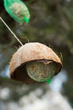 Suet balls. On a tree Royalty Free Stock Photo
