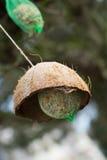 Suet balls Royalty Free Stock Photo