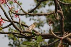 Suffisance d'oiseau Photos libres de droits
