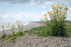 Suffolk gravel beach Stock Photos