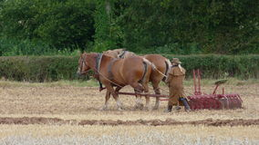 Suffolk Heavy Horses at a Country Show in England. Two Suffolk Heavy Horses pulling harrow at a Farm Working Day event  in Somerset England Stock Photo