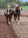 Suffolk konie przy zaorki dopasowaniem w Anglia Obraz Stock