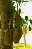 Suficiente economia, vegetal que planta para comer-se imagens de stock