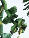 Suficiente economia, vegetal que planta para comer-se foto de stock