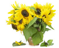 Suflowers in simple rural pot Stock Image