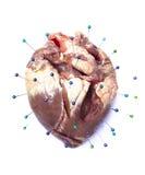 Sufrimiento del corazón Imagen de archivo libre de regalías