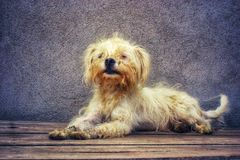 Sufrimiento del perro fotos de archivo libres de regalías