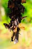 suga för fjärilsnectar Arkivbild