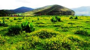 suga, flores, nuvens brancas, floresta da montanha, pastagem, cenário de Shangri-La Fotos de Stock