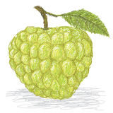 Sugar-apple Royalty Free Stock Photo