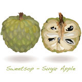 Sugar Apple vector Royalty Free Stock Photo