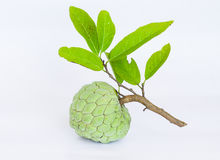 Sugar apples or Annona squamosa Linn Stock Photo