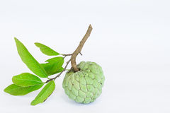Sugar apples or Annona squamosa Linn on white background. Custard apples or Sugar apples or Annona squamosa Linn Isolated on white Royalty Free Stock Image