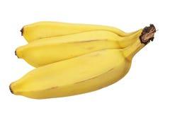 Sugar Bananas Royaltyfri Foto