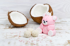 Sugar bear cub and coconut royalty free stock photos