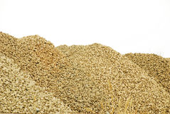 Sugar beet. On white background Stock Images