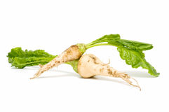 Sugar beet. Leaves on white background stock images